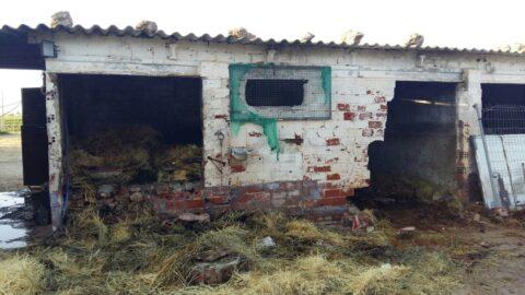 Incendio en una granja de animales en Socuellamos